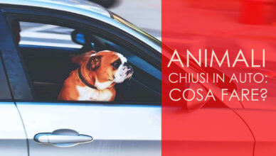 animali chiusi in auto